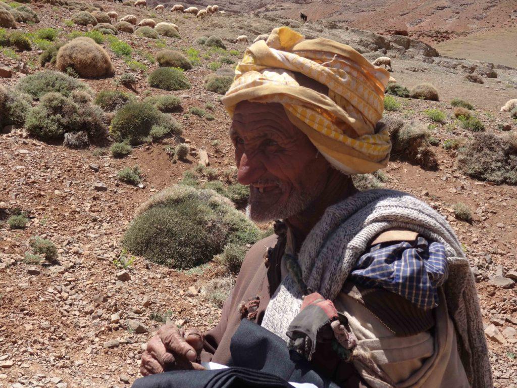 Berger Haut-Atlas Marocain