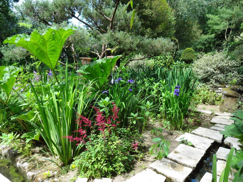 Espace dédié aux plantes aquatiques et aux bassins