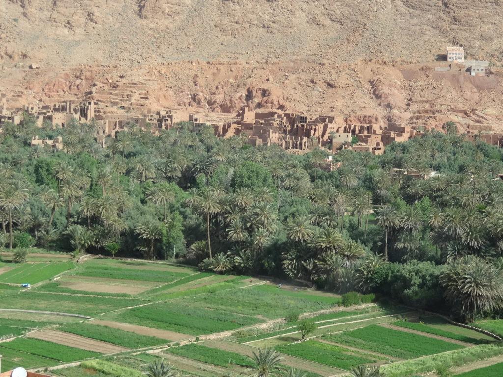 Oasis dans la vallée du Drâa