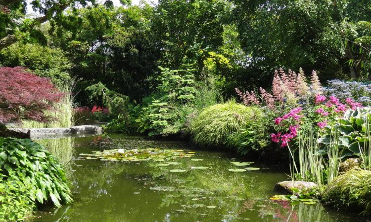Bassin japonais de 300 m² on l'on peut y voir de petites grenouilles vertes et de petites libellules aux ailes bleutées